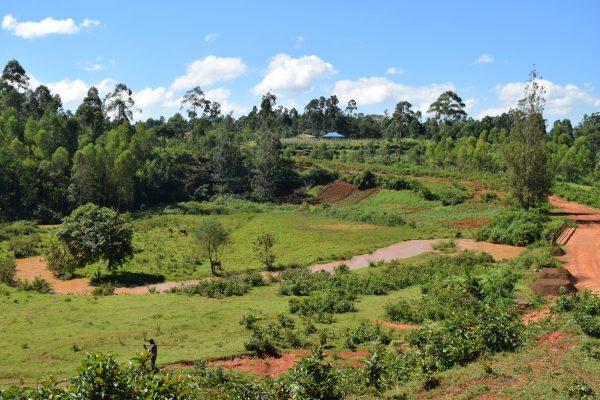 Natur Ebukanga