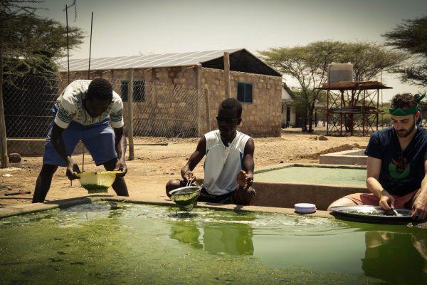 Spirulina Pond Harvest Jens Partner Nariokotome