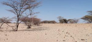 Kenia leidet unter der schlimmsten Heuschreckenplage seit 70 Jahren